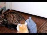Коты и говорящие хомяки